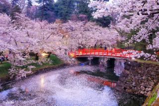 Японія, Токіо, парк, дерева, сакура, весна, природа, водойма, канал, місток