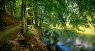 nature, summer, forest, Park, path, river, branches