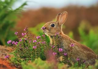 Тварина, заєць, природа, трава