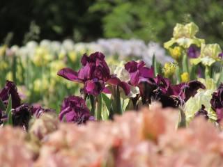 весна, квіти, природа, сонячний день, квітучі