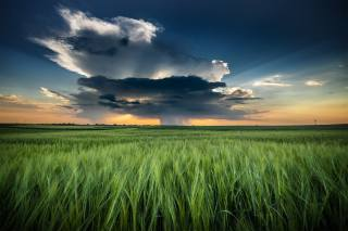 природа, краєвид, поле, зерновые, колосся, хмари, гроза