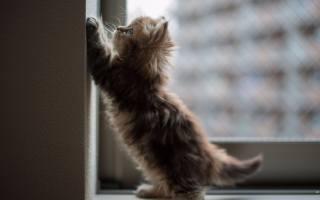 кошеня, малюк, фото, позитив