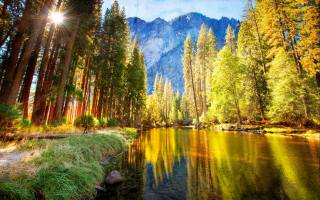river, pine, grass, mountains, the rays of the sun, summer