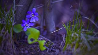 nature, tree, flowers, forest