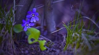 природа, дерево, квіти, ліс