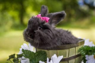 Тварина, кролик, бант, відро, квіти
