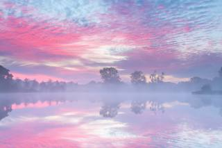 dawn, trees, the sky, pink, fog, river, haze, morning