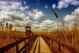 природа, місток, небо
