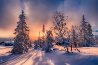 зима, деревья, снег, фото, Jorn Allan Pedersen, закат, дома