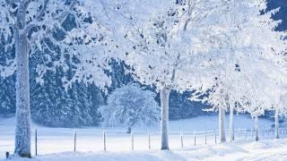 природа, зима, іній, красиво
