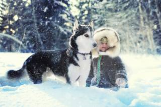 winter, child, husky, snow