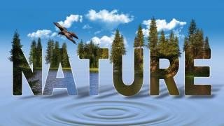 небо, хмари, ліс, вода, птиця, напис, природа, природа