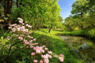 příroda, krásně