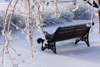 winter, branches, bench, snow