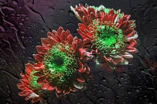 glass, the rain, flowers