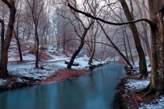 winter, trees, snow, fog, nature
