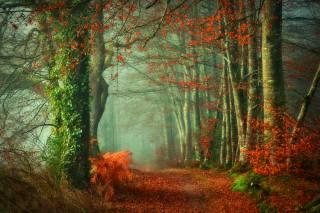 ліс, дерева, осінь, природа
