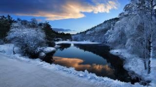 зима, снег, деревья, вечер