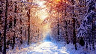 winter, snow, forest