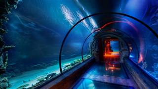 tunel, подводный Синий, akvárium