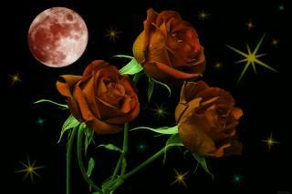 троянди, місяць, зірки