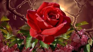 květina, růže, větvičky, sníh, listy, květiny, jaro, zima, léto