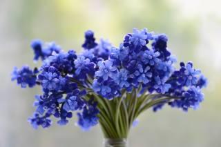 букет, весенних, голубых, цветов