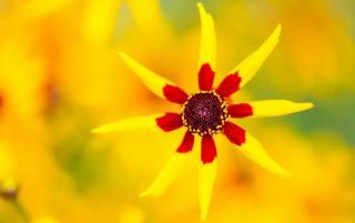 květina, makro
