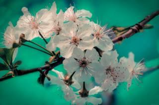 větvička, Květen, jaro