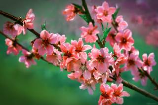 May, spring, branch