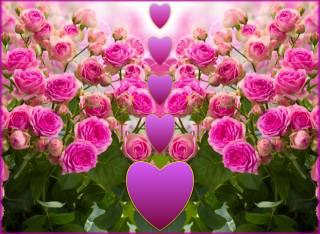 цветы, сердечки, Любовь
