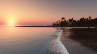 shore, pink, sunset, palm trees
