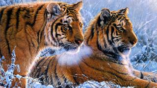 tigers, tiger, winter, snow, art