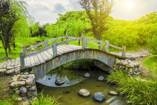 the bridge, river, plants, Park, the sun