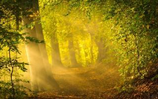 mood, leaves, tree, autumn
