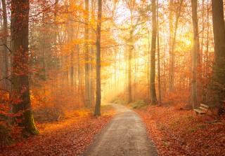 fog, fall colors, landscape, autumn
