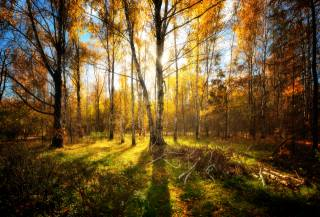 forest, autumn, leaves
