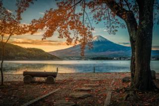 autumn, nature, tree, forest