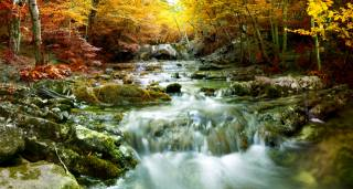 autumn, moss, trees, stream, nature, forest