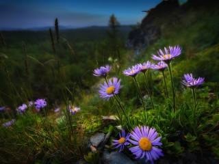 wildflowers, the slope