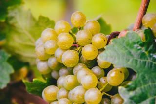 grapes, leaves, bokeh