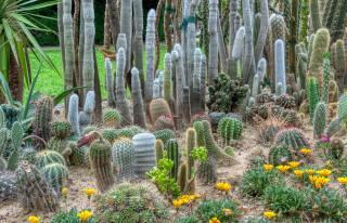 kaktusy, květiny, botanická zahrada