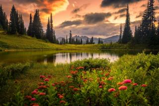 nature, landscape, the lake, the shore, grass, mountains, flowers, trees, ate, clouds, evening