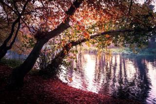 autumn, nature, tree, foliage, the pond, the shore