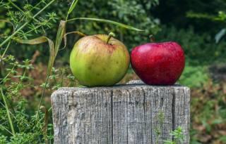 apples, colorful, stump, plants, bokeh