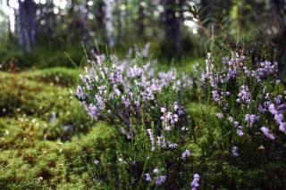 květiny, příroda