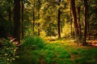 forest, paint, autumn