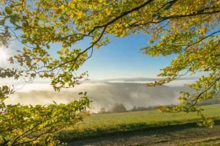 branches, leaves, fog, landscape, autumn