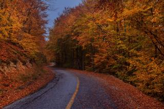 forest, road, leaves, twilight