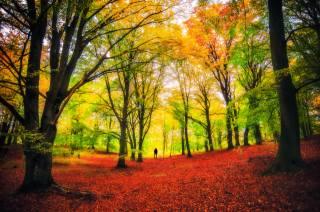 trees, autumn colors, nature, Park